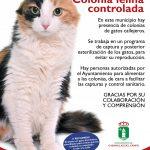 CARTEL COLONIA FELINA WEB